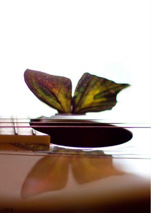 Бабочка лимонного цвета